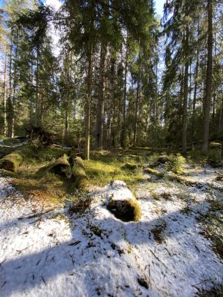 Wilderness Alexander Nikitenko Unsplash